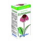 Echinacea 80 Comprimidos <hr>7.17€ / Unidad
